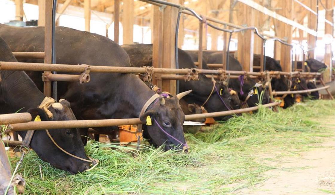 田中畜産について